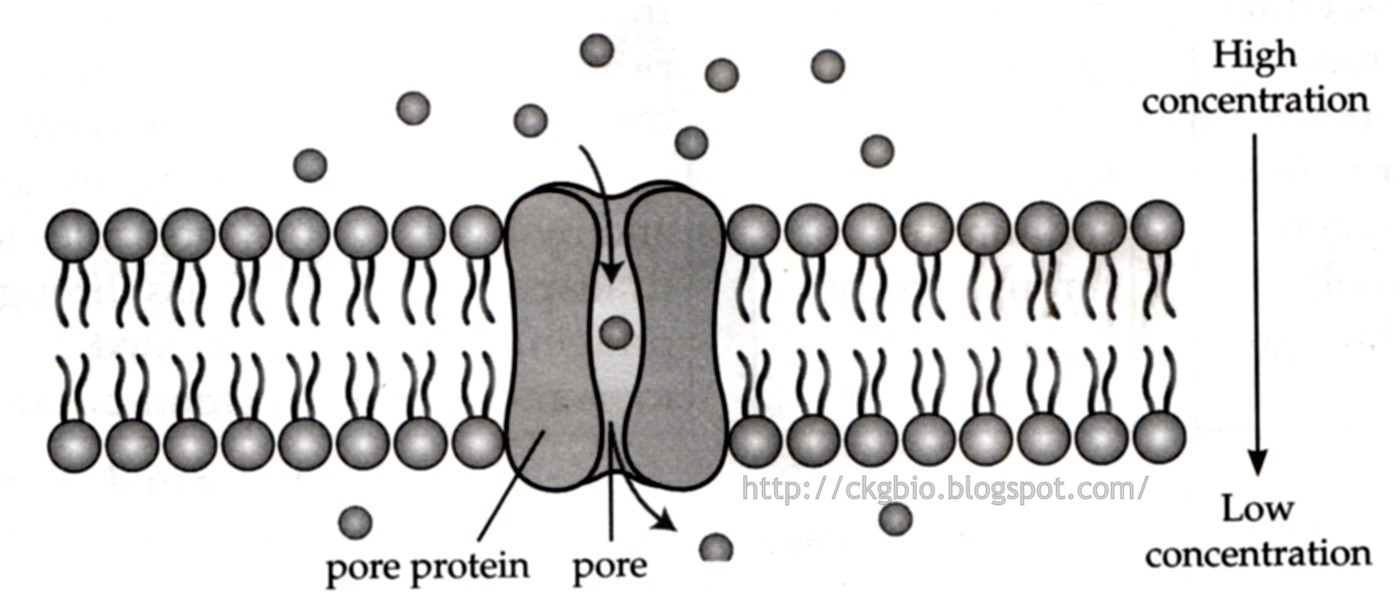 Structure and function of biological membranes essay